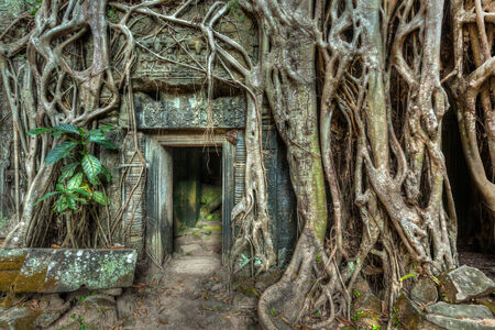 portals: Travel Cambodia concept background - ancient stone door and tree roots, Ta Prohm temple ruins, Angkor, Cambodia