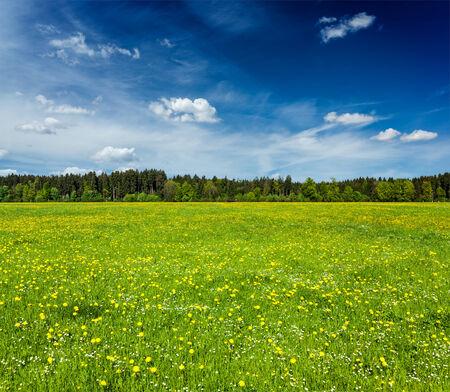 green meadow: Summer meadow. Bavaria, Germany Stock Photo