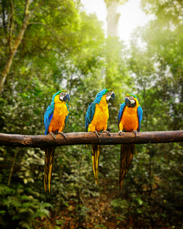 loros verdes: Ararauna azul y amarillo Guacamayo Ara en el bosque Foto de archivo
