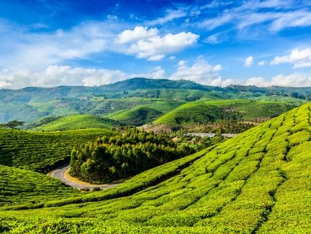 Kerala India Viajes de fondo - las plantaciones de té verde en Munnar, Kerala, India - atracción turística