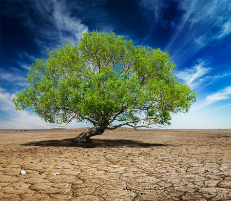 Lonely green tree on cracked earth Stock Photo