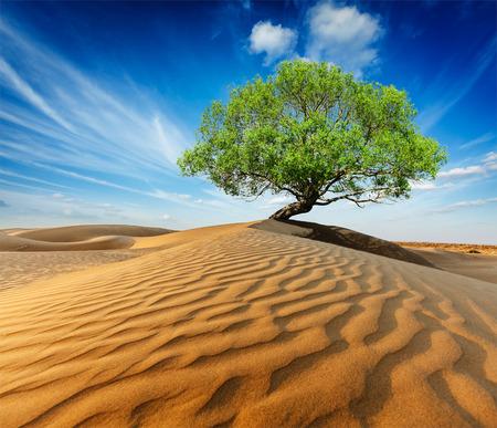 사막의 모래 언덕에서 외로운 녹색 나무