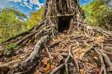 サンボー Prei Kuk 寺院遺跡、カンボジア 写真素材