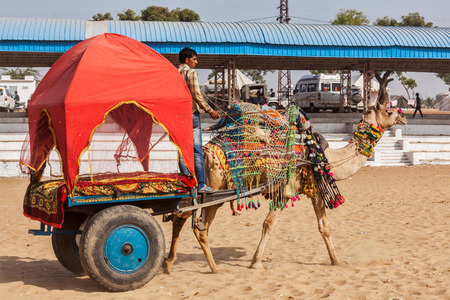 fairs: PUSHKAR, INDIA - NOVEMBER 22, 2012: Camel taxi for tourists at Pushkar camel fair (Pushkar Mela) -  annual five-day camel and livestock fair, one of the worlds largest camel fairs and tourist attraction