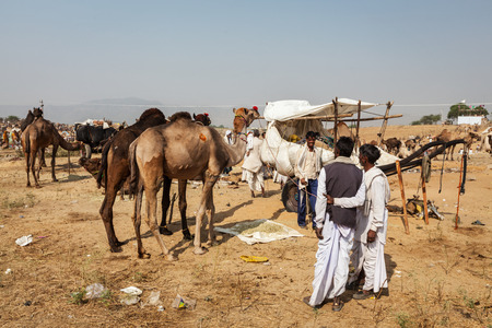fairs: PUSHKAR, INDIA - NOVEMBER 20, 2012: Indian men and camels at Pushkar camel fair (Pushkar Mela) -  annual five-day camel and livestock fair, one of the worlds largest camel fairs and tourist attraction