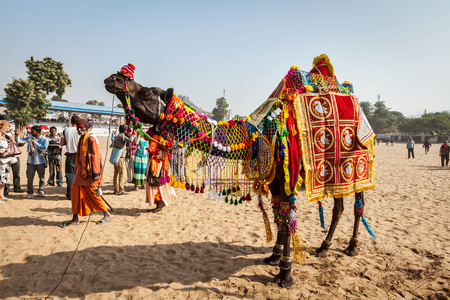 PUSHKAR, INDIA - NOVEMBER 22, 2012: Camel decoration competition contest at Pushkar camel fair (Pushkar Mela) - annual five-day camel and livestock fair, one of the world's largest camel fairs and tourist attraction 에디토리얼