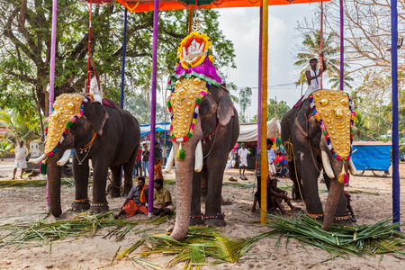 embellished: KOCHI, INDIA - FEBRUARY 24, 2013: Decorated elephants with brahmins (priests) in Hindu temple at temple festival. There about 550 domesticated elephants in Kerala state.