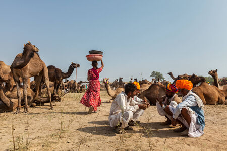 fairs: PUSHKAR, INDIA - NOVEMBER 20, 2012: Indian men and woman and camels at Pushkar camel fair (Pushkar Mela) -  annual five-day camel and livestock fair, one of the worlds largest camel fairs and tourist attraction