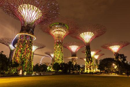 SINGAPUR - 31 de diciembre 2013: Vista nocturna de Supertree Grove en los jardines junto a la bahía. Parque se extiende por 101 hectáreas futurista se a convertido en Singapur el principal espacio de recreación al aire libre urbano e icono nacional