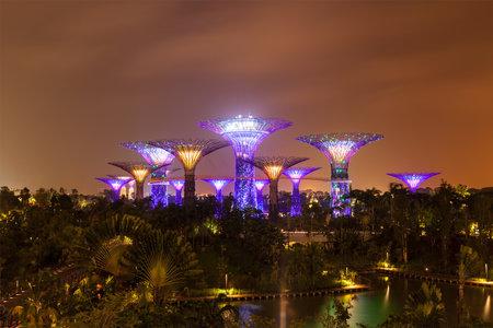 anochecer: SINGAPUR - 31 de diciembre 2013: Vista nocturna de Supertree Grove en los jardines junto a la bahía. Parque se extiende por 101 hectáreas futurista se a convertido en Singapur el principal espacio de recreación al aire libre urbano e icono nacional