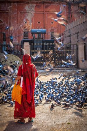hindues: JAIPUR, INDIA - 18 de noviembre de 2012: Mujer india en sari alimentar palomas en la calle. Hindúes y sijs alimentar palomas por razón religiosa
