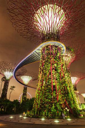 anochecer: SINGAPUR - 31 de diciembre 2013: Vista nocturna de Supertree Grove en los jardines por la bahía. Parque futurista extiende por 101 hectáreas está a convertirse en primer ministro de Singapur espacio de recreación al aire libre urbano e icono nacional