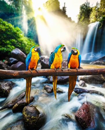 青と黄色のコンゴウインコ Ara ararauna 写真素材