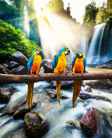 animales de la selva: Azul y amarillo Guacamayo Ara ararauna Foto de archivo