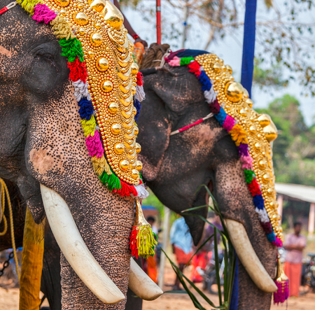 Decorated elephants in Hindu temple at festival
