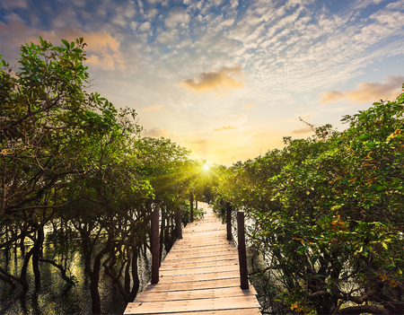 travelled: Wooden bridge in flooded rain forest jungle of mangrove trees