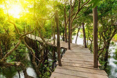 mangrove forest: Wooden bridge in rain mangrove forest jungle Stock Photo