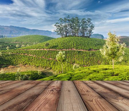 tea plantations: Green tea plantations in Munnar, Kerala, India