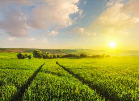 moravia: Beuatiful sunset in fields of Moravia, Czech Republic