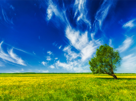 Spring summer green field scenery lanscape with single tree Stock Photo