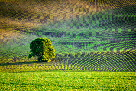 ploughed: Lonely tree in ploughed field