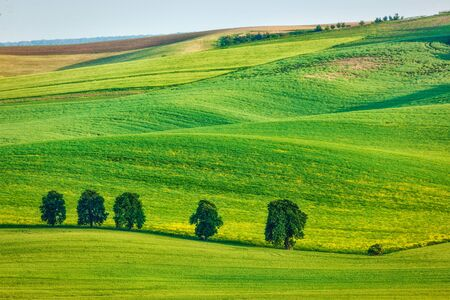 moravia: Rolling landscape of South Moravia with trees.