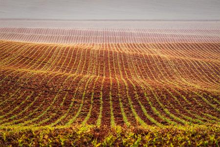 moravia: Rolling fields of Moravia