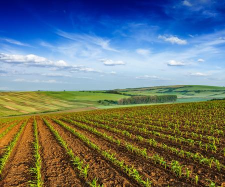 furrow: Rolling fields of Moravia