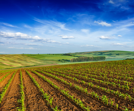 ploughed field: Rolling fields of Moravia