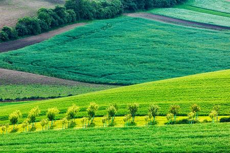 Apple trees in rolling fields of Moravia
