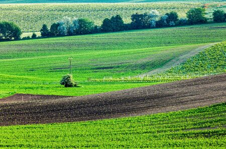 moravia: European rural wallpaper - Moravian ploughed field with furrows and sprouts , Moravia, Czech Republic Stock Photo
