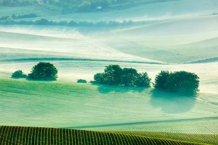 moravia: Moravian rolling fields landscape in morning mist. Moravia, Czech Republic