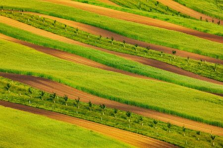czech republic: Striped fields of South Moravia in summer, Czech Republic