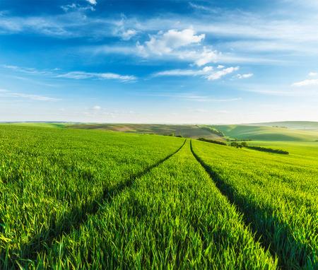 blue summer sky: Rolling summer landscape with green grass field under blue sky