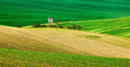 czech republic: Panorama of Moravian rolling landscape with hunting tower shack on sunset. Moravia, Czech Republic