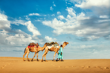 rajasthan: Rajasthan travel background - Indian cameleer (camel driver) with camels in dunes of Thar desert. Jaisalmer, Rajasthan, India Stock Photo