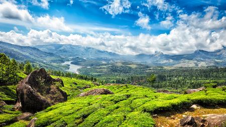 tea plantations: Panorama of green tea plantations in Munnar, Kerala, India