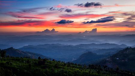 茶畑と山脈の夕日のパノラマ。ムンナール、ケーララ, インド