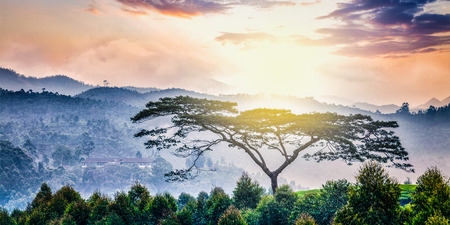 south india: Panorama of lonely tree on sunrise in hills. Kerala, India Stock Photo