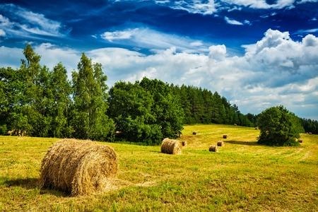 agricultura: Fondo de la agricultura - Balas de heno en campo en verano Foto de archivo
