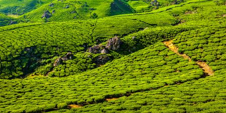 kerala: Kerala India travel background - panorama of green tea plantations in Munnar, Kerala, India - tourist attraction