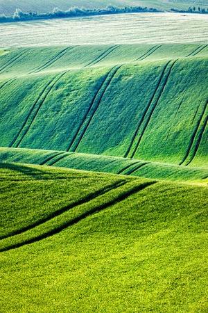 moravia: Rolling landscape of green fields in South Moravia, Czech Republic Stock Photo