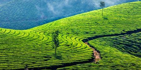 Kerala Indien reisen Hintergrund - Panorama der grünen Teeplantagen in Munnar, Kerala, Indien - ein Touristenmagnet Lizenzfreie Bilder