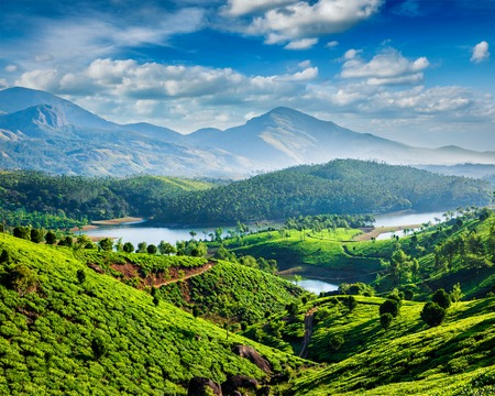 cropland: Tea plantations and Muthirappuzhayar River in hills near Munnar, Kerala, India Stock Photo