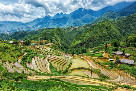 paddy: Rice field terraces (rice paddy fields). Near Cat Cat village - popular tourist trekking destination. Near Sapa, Vietnam