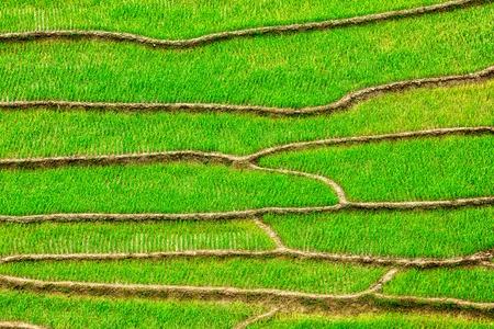 sapa: Green rice field terraces Near Sapa, Vietnam