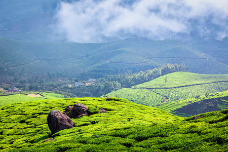 agriculture india: Kerala India travel background - green tea plantations in Munnar with low clouds, Kerala, India - tourist attraction