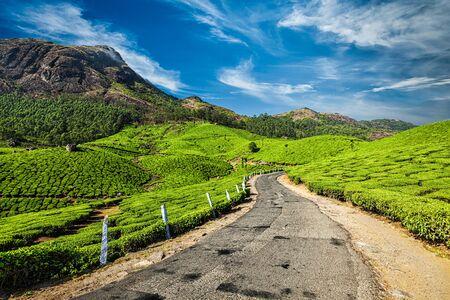 munnar: Scenic road in green tea plantations, Munnar, Kerala state, India Stock Photo