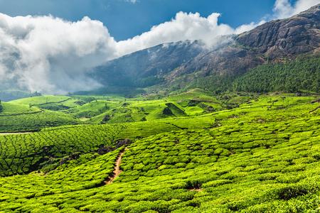 tea plantations: Scenic green tea plantations in Munnar, Kerala state, India Stock Photo