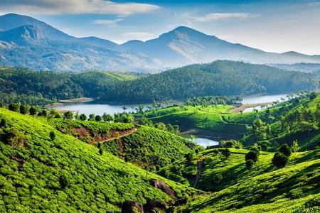 Teeplantagen und Muthirappuzhayar Fluss in den Hügeln in der Nähe von Munnar, Kerala, Indien